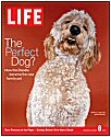 Timshell Doodle Sadie makes the cover of Life Magazine! (© Life Inc. 2004, used with permission)