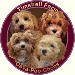 Timshell Farm CAVA-POO-CHONS