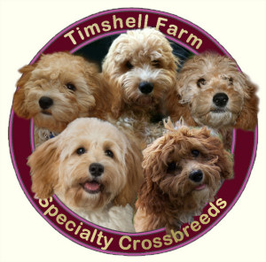 Timshell Farm Specialty Crossbreed Puppies